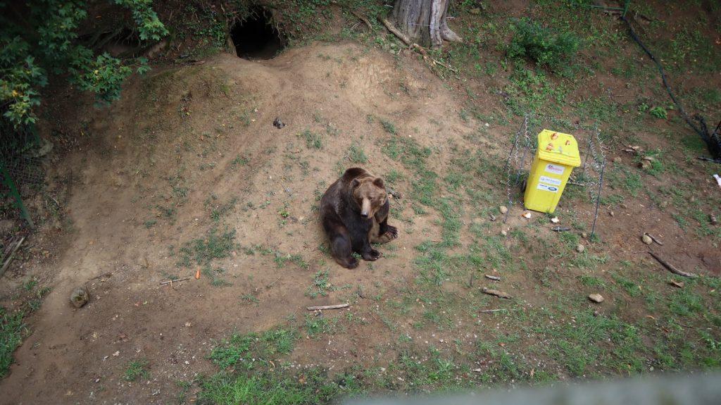 košická zoo medveď