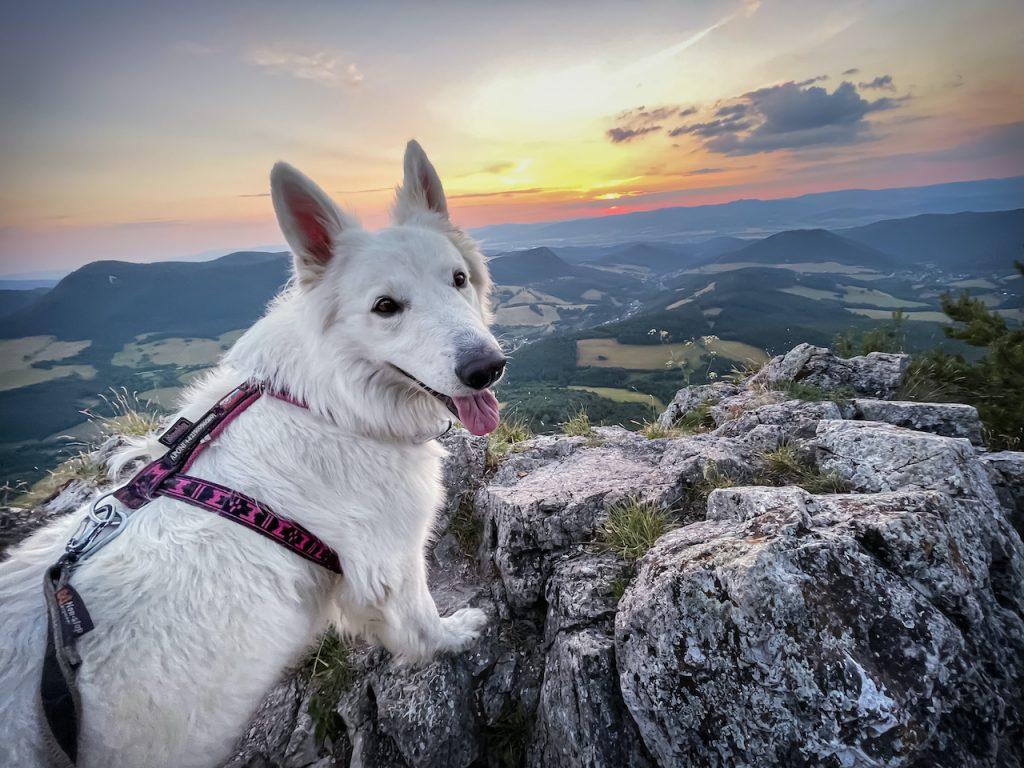 Cesta hrdinov SNP švajčiarsky ovčiak